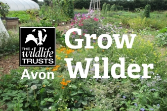 Grow Wilder site with logo