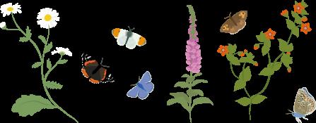 Pollinators and flowers illustration