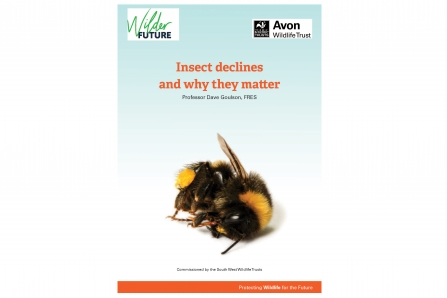 Action for Insects report from cover with background